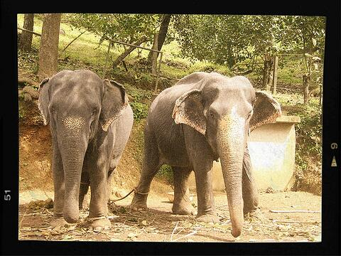 Elefanten. Von denen man sagt, dass sie sich alles merken können!