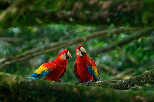 Kosten Work and Travel Costa Rica