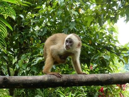 Manu_Nationalpark_Affe_Südamerika Reiseportal