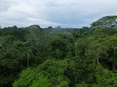 Manu_Nationalpark_Blick_von_Aussichtsturm1_Südamerika Reiseportal