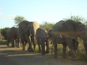 niki_wt_swaziland2