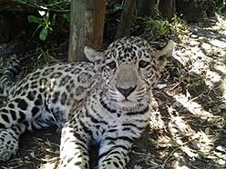 Suedafrika-Leobaby
