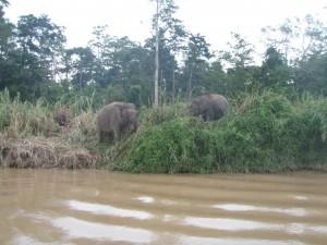 Praktikum Borneo
