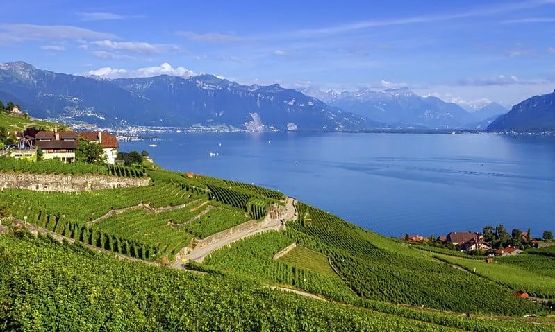 Weinberge-Montreux-Sprachaufenthalt-Französisch
