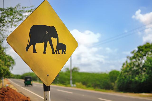Elefantenschild 640x425