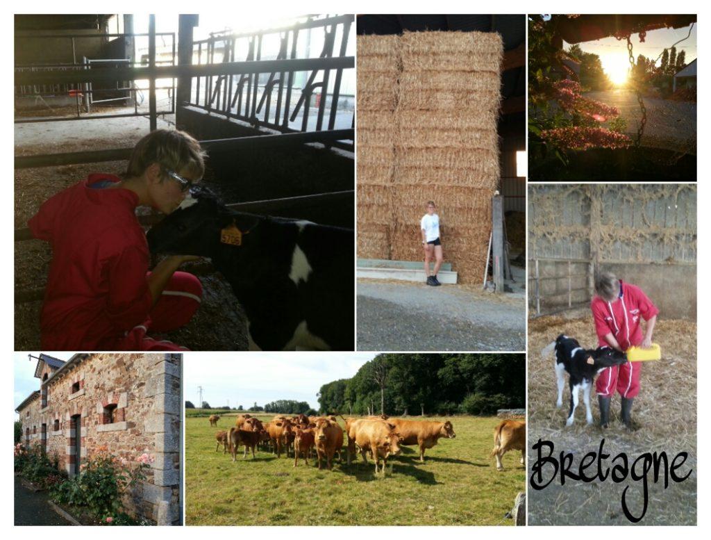 Farmstay Bretagne: Jeder Tag ein neues Abenteuer