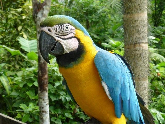Eine Reise ins peruanische Amazonasgebiet