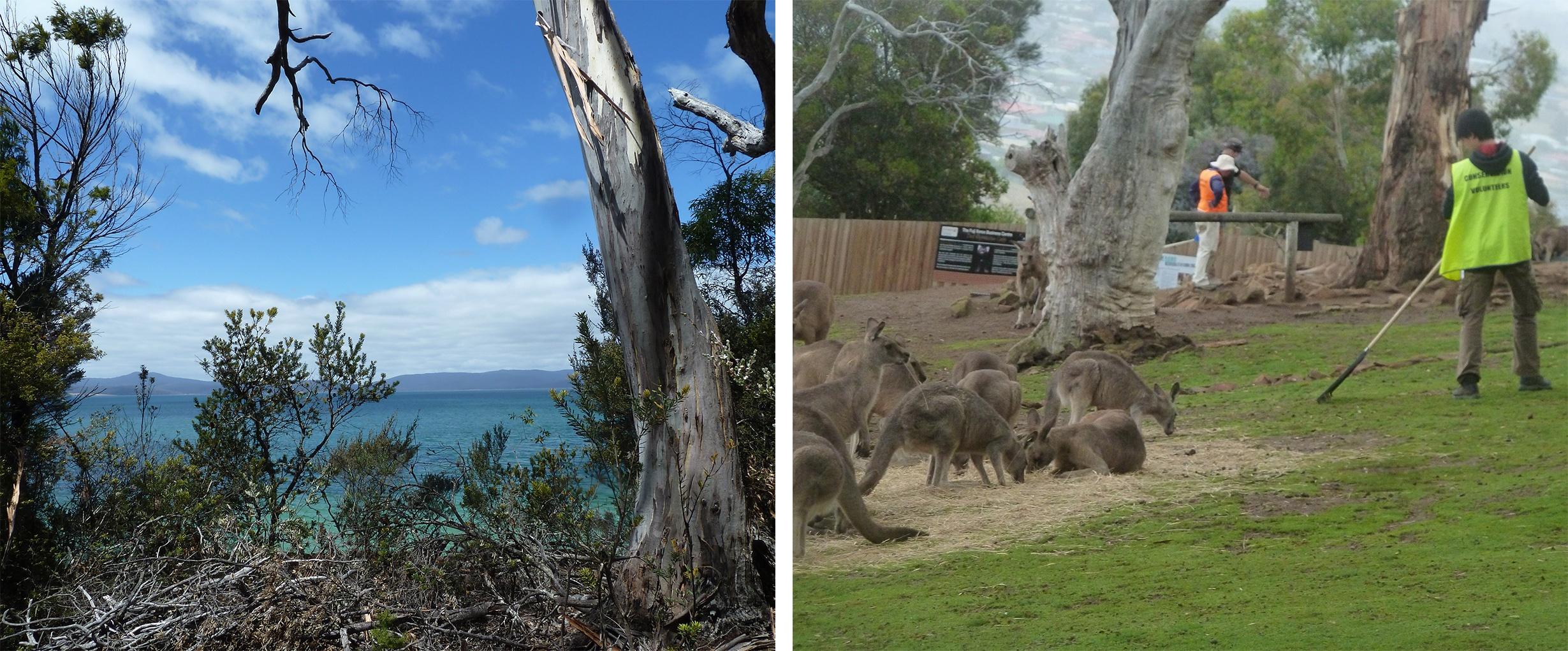 Freiwilligeneinsatz in Hobart, Tasmanien - Teil 1