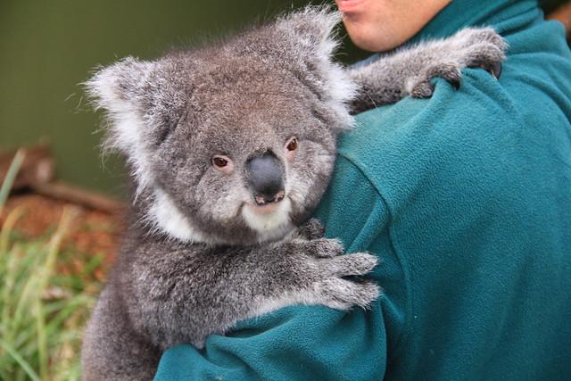 australien-reiseziel-natur