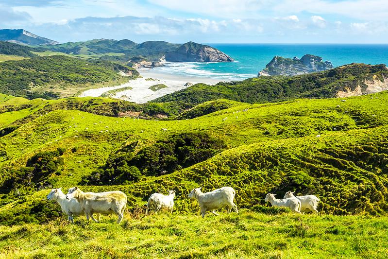 Séjour linguistique en Nouvelle-Zélande: programmé pour l'hiver 2020